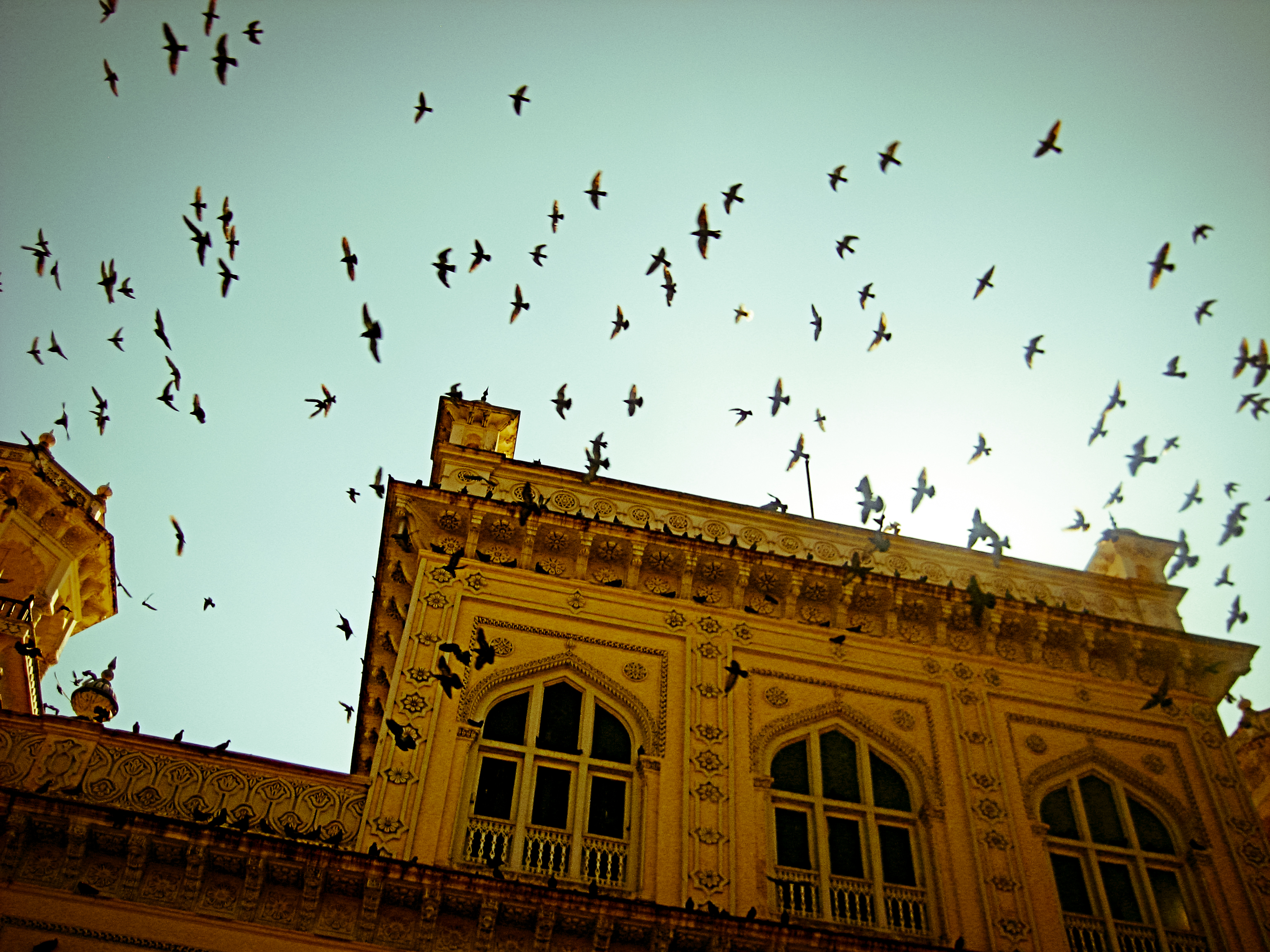 Birds in flight, Jaipur, 2011